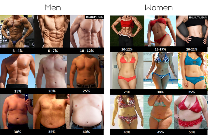 bodyfatpercentages