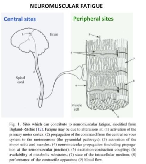 cns vermoeidheid zenuwstelsel
